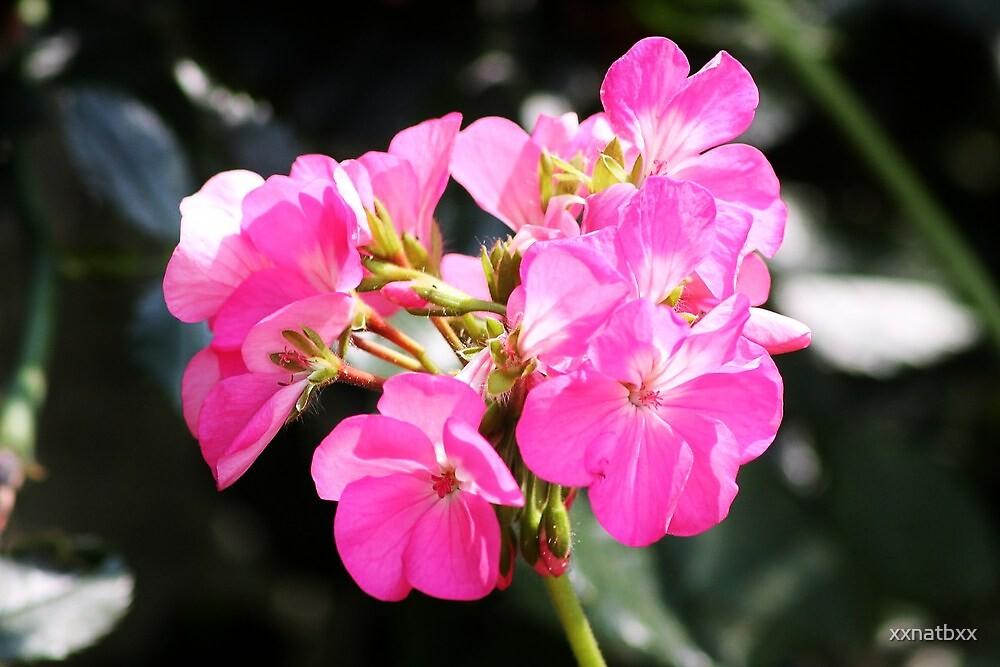 lil pink flowers  by xxnatbxx