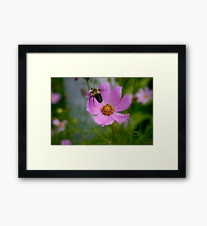 "Bumble Bee 1 ""target acquired"" Framed Print"