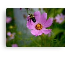 """Bumble Bee 1 """"target acquired"""" Canvas Print"""