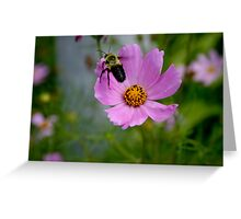 """Bumble Bee 1 """"target acquired"""" Greeting Card"""