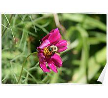 "Bumble Bee 2 ""lunch break"" Poster"