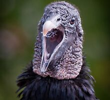 """Black Vulture Singing"" by John Hartung"