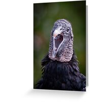"""Black Vulture Singing"" Greeting Card"