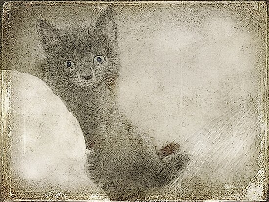 Kitty Art by DottieDees