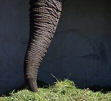 Elephant by Bluesrose