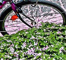 Biking through petals in Bonn by RecipeTaster