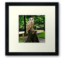 Owl Statue Framed Print