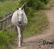 Dawson - NNEP  Ottawa, ON by Tracey  Dryka