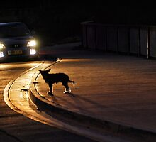 night stray by carol brandt