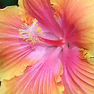 Hibiscus by Michelle Callahan