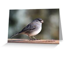 Before the snow - dark-eyed junco Greeting Card