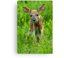 Sweet Little Baby Canvas Print