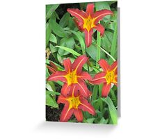 Red Day Lilies V Greeting Card