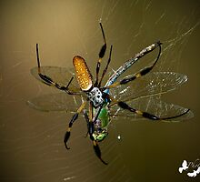 Spider Devours Dragonfly by TJ Baccari Photography
