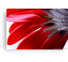 life is behind something in color Canvas Print
