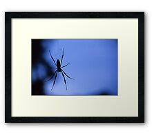 Spider in Shadow Framed Print