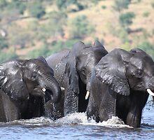 Elephants - Chobe by Richard van der Spuy