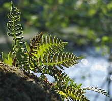 Lakeside Ferns by Max Buchheit