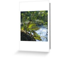 Lakeside Ferns Greeting Card