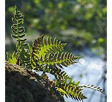 Lakeside Ferns Photographic Print