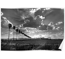 palms and cumulus clouds Poster