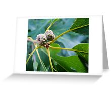 Budding Acorns Greeting Card