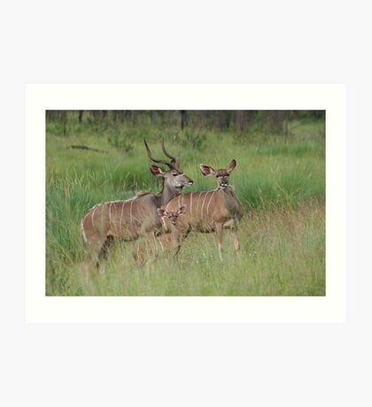 Kudu Family Art Print