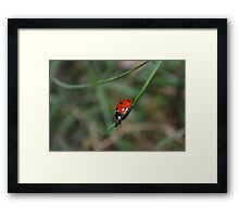 Spotted in the Grass Framed Print