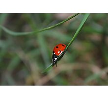 Spotted in the Grass Photographic Print