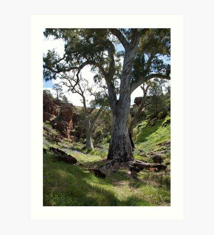 Flinders Trees Art Print
