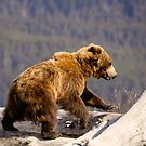 On The Run - Alaska  by Melissa Seaback