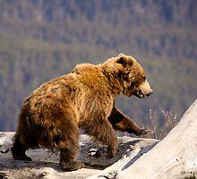 On The Run - Alaska  by Melissa Seaback