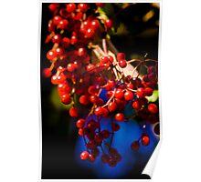 Festive Berries Poster