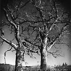 Darkroom Print 9 by BKSPicture