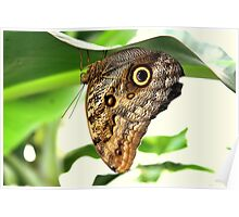 Owl Buttefly Poster