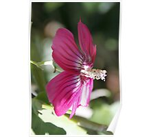 Flowers in Botanical Gardens Poster