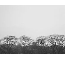 the serenity of trees Photographic Print
