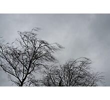 Trees Blowing In The Wind Photographic Print