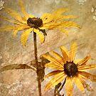 Summer Gold by Sheri Nye