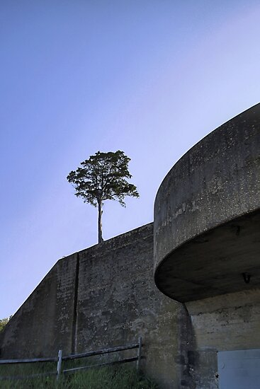 Lone Tree at the Bunker by djphoto