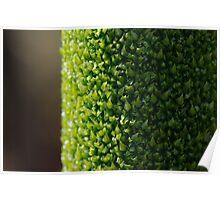 Xanthorrhoea flower stem Poster