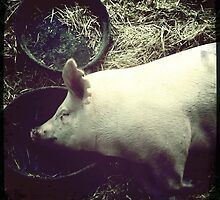 Cecil County Pig Napping by Bonnie MacAllister
