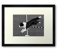 Border Collie Jumping Framed Print