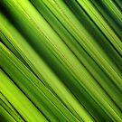 Green by Gareth Bowell