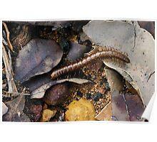 Millipede on forest floor Poster