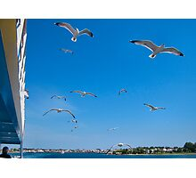 GULLS FOLLOWING THE SHIP. Photographic Print