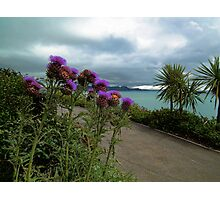 View From Lyme's Gardens Photographic Print