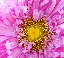 Pink Flower in Summer by riotinthesun