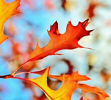 Autumn Cheer by Georgie Hart
