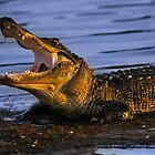 Gator Yawn by Joe Jennelle